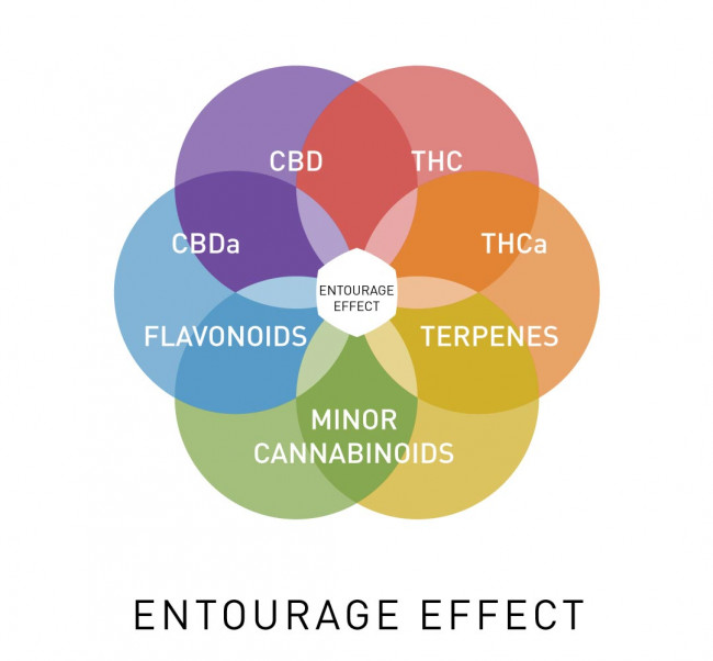 What Is The Entourage Effect?   Care By Design